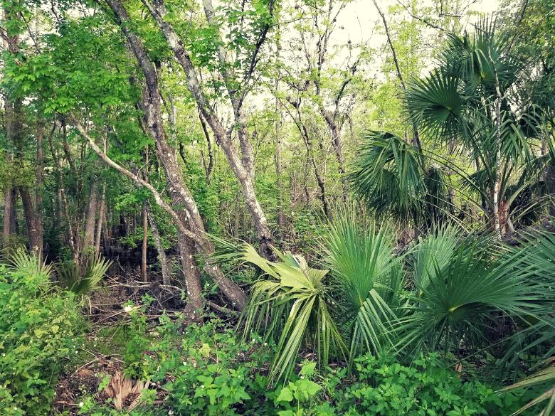 Lush forest at Deland KOA